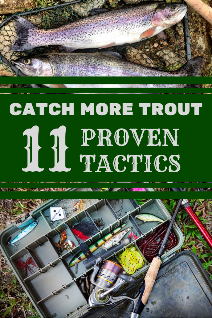 trout fishing guide how to catch fish
