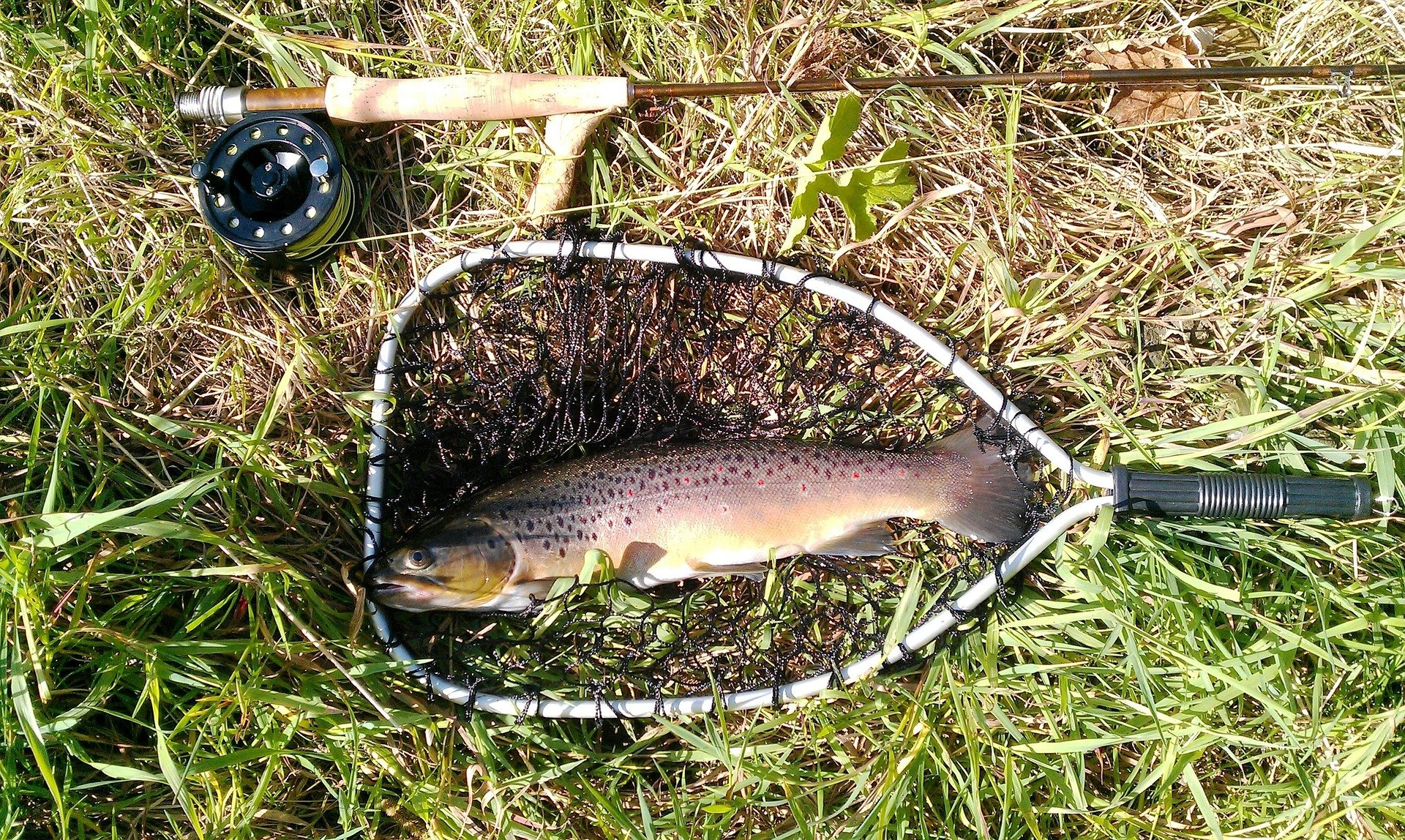 3 flies for finicky winter trout