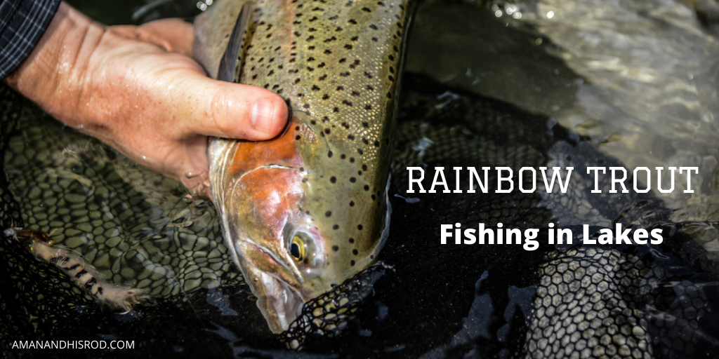 hand hold rainbow trout