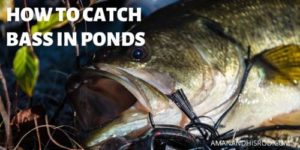 bass fishing in ponds