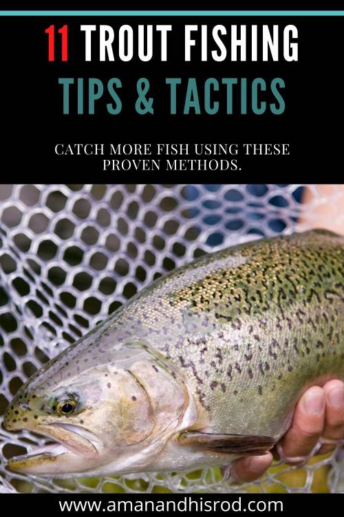 trout fishing tips and tactics