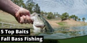 5 lures for catching fall bass